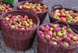 agu-schwelm,de - Äpfel