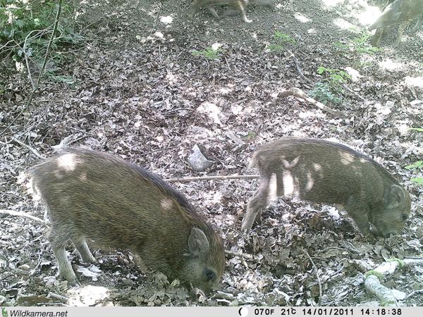 """Wildtiere auf dem Grundstück """"Am Tannenbaum"""""""