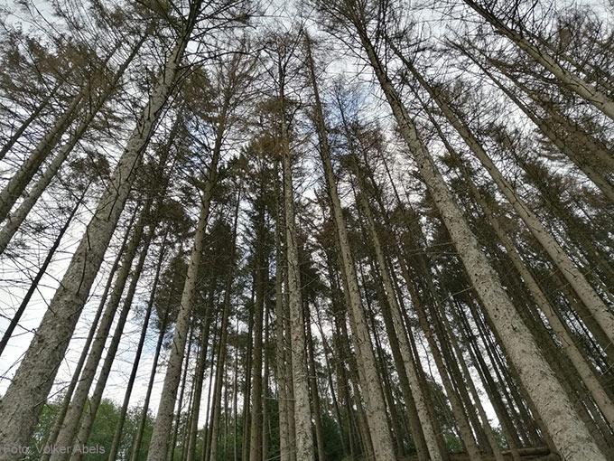 Die Folgen des Klimawandels - abgestorbene Bäume